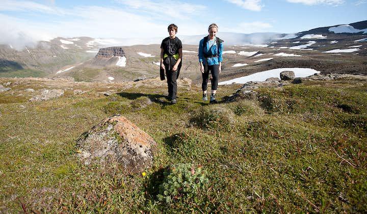 西峡湾豪斯川迪尔(Hornstrandir)自然保护区徒步团