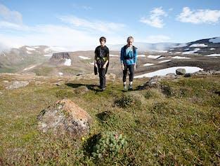 Rezerwat Hornstrandir   Jednodniowa wycieczka na Fiordach Zachodnich