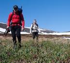 Hornstrandir pełen jest arktycznej fauny i flory