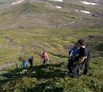 Paysage de verdure à la réserve Hornstrandir