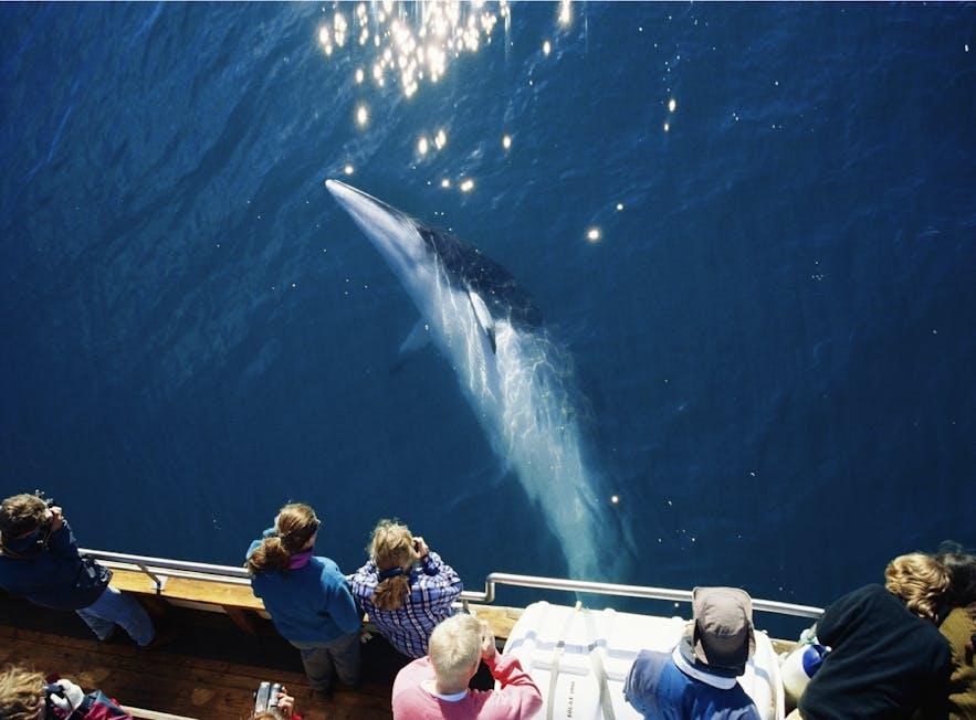 胡萨维克观鲸