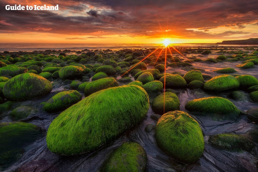 Moss covered rocks sit in the light of the Midnight Sun.