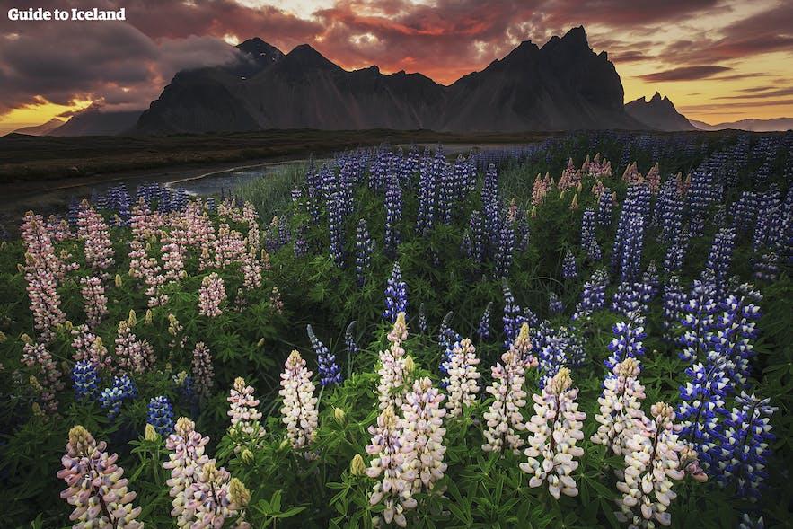 冰岛夏季美景