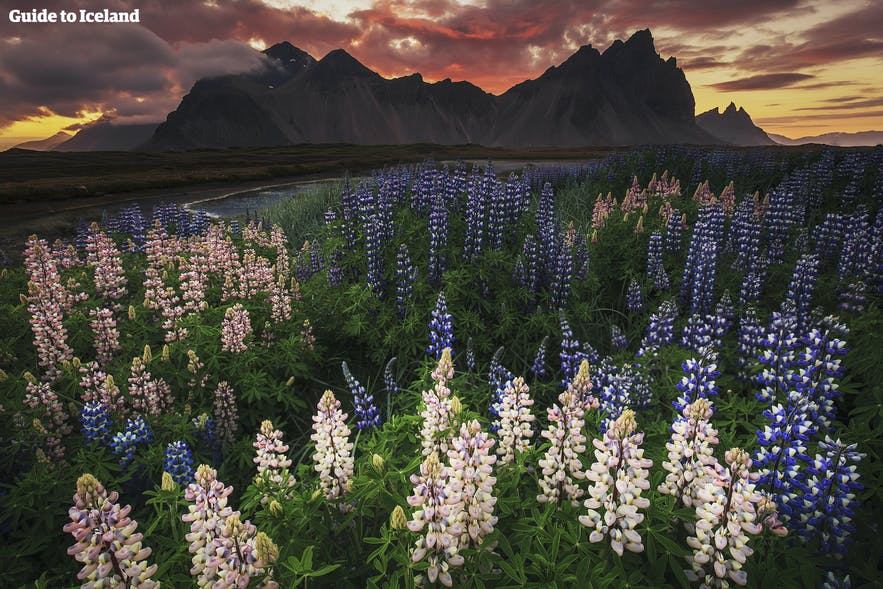Vestrahorn and Brunnhorn in east Iceland