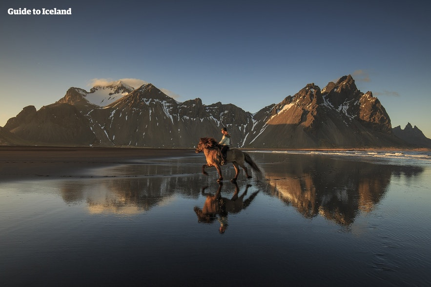 An Icelandic horse gallops before Mount Vestrahorn.