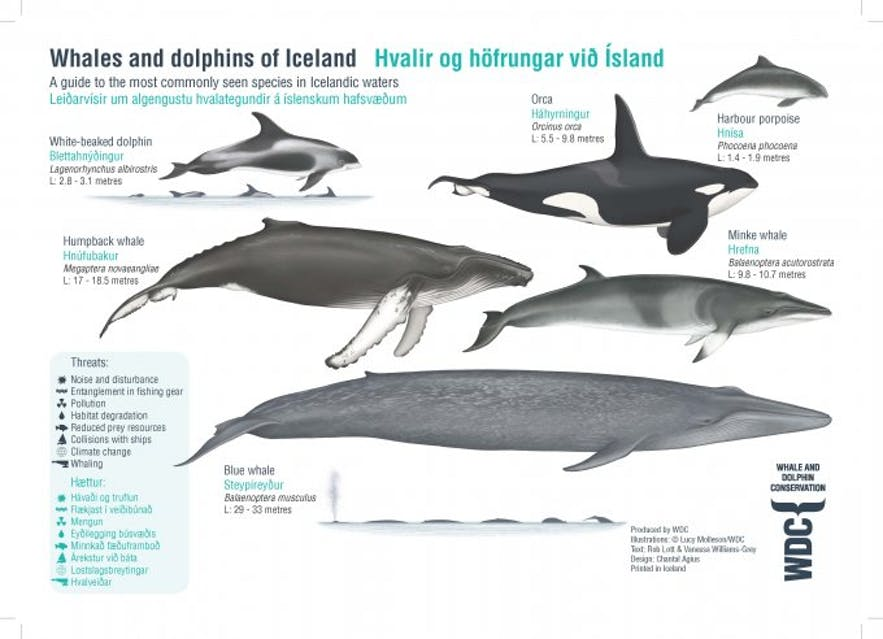 Carte montrant les espèces de baleines en Islande