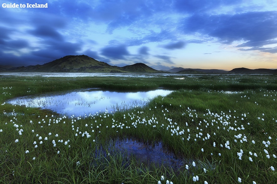 아이슬란드 배낭여행 팁!
