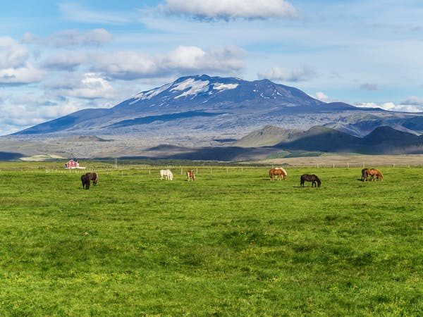 Reykjavík Sightseeing