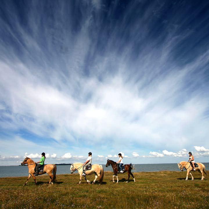 黄金圈+骑马组合团|中文讲解器