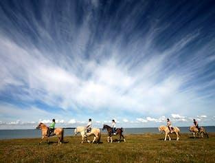 日本語音声ガイド付き|ゴールデンサークルと乗馬ツアー