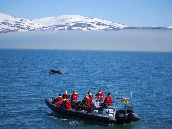 Elding Adventure at Sea