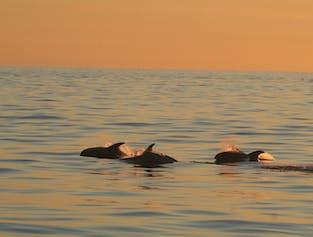 Observation de baleines sous le soleil de minuit