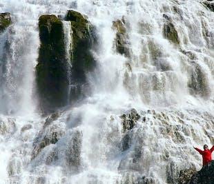 Dynjandi Wasserfall & Westfjorde | ideal für Kreuzfahrtpassagiere