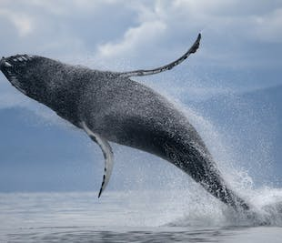 ATV & Whale Watching Tour from Reykjavik