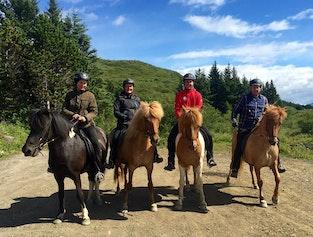 Heiðmörk Nature Horse Riding Tour