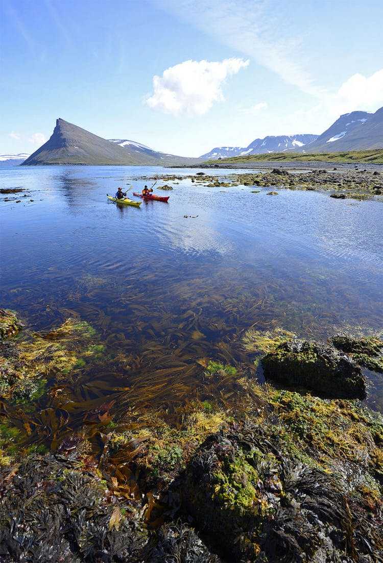 Hornstrandir Nature Reserve is not only the remotest part of the Westfjords, it is one of the remotest parts of Europe.