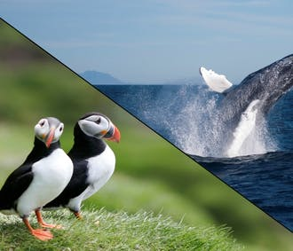 Whales & Puffins | Combo Tour