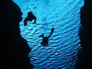 Diving in Sifra Fissure & Whale Watching