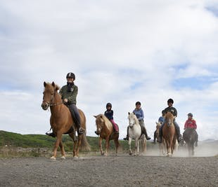 Whale Watching & Horse Riding | Day-Tour from Reykjavik