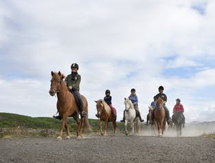 Whale Watching and Horseback Riding