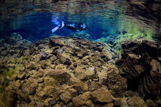 Small Group Silfra Snorkelling Adventure From Þingvellir