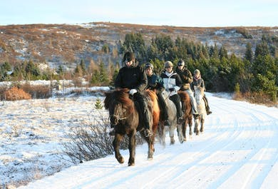 Horse Riding & Northern Lights Hunting by Boat