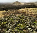 Much of the Reykjanes Peninsula is haunting, moss-covered lava fields.