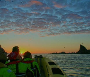 One Hour Small Island Tour in Vestmannaeyjar