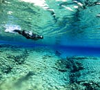 You are sure to be amazed and dazzled by the many shades of blue so prevalent in Silfra Fissure.