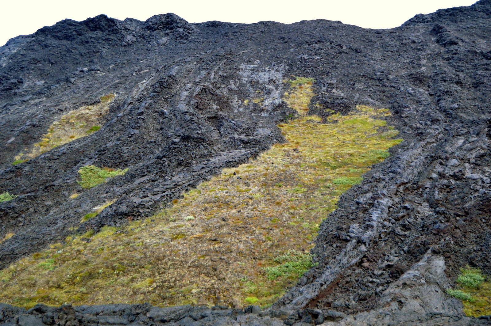 A Unique Lava Walk through the Colourful Lava Field at Gjástykki in North-Iceland
