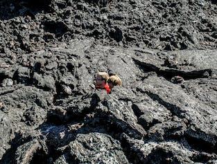 ミーヴァトン発 広大な溶岩大地でハイキング