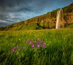 夏に咲く小さな花、セリャランズフォスの滝を背景に。