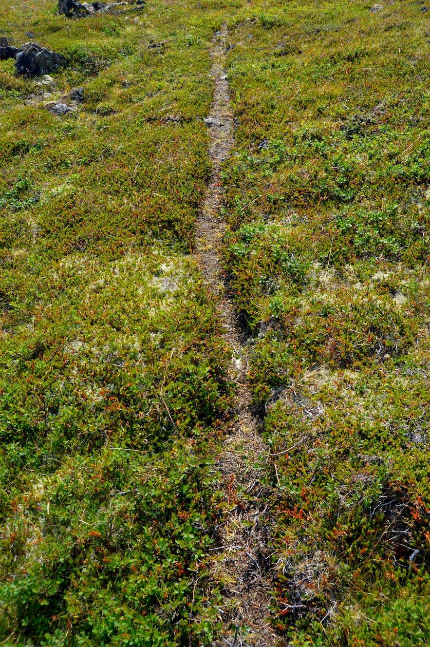 The sheep path leading to Bjartmarssteinn Rock in Iceland
