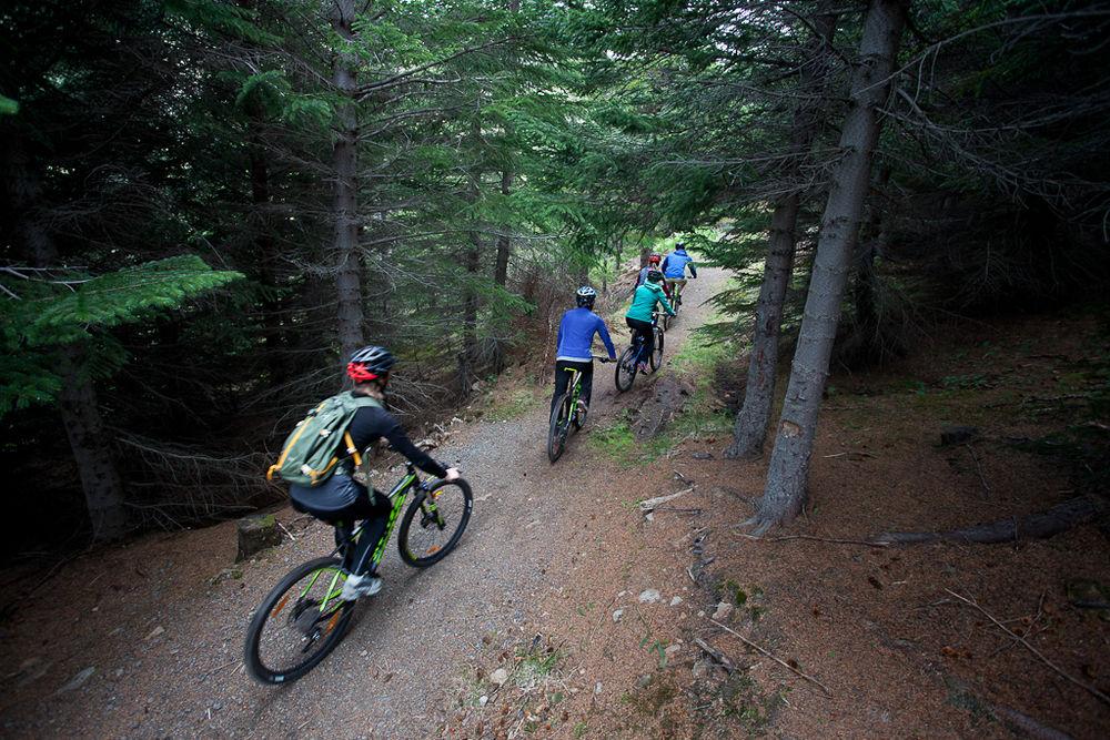 자전거를 타고 웨스트피요드르의 이사피요르드 주변의 숲속을 지나갑니다.