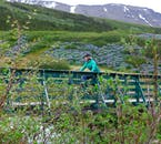 Cycle through fields of lupins and wildflowers in the Westfjords around Ísafjörður.