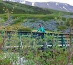 Cycle through fields of lupins and wildflowers in the Westfjords around Ísafjörður.
