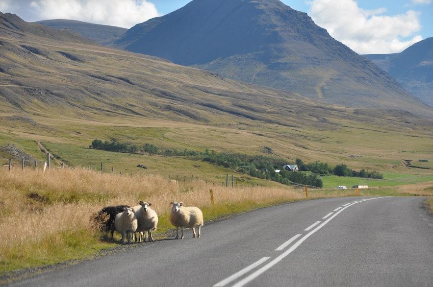 Icelandic north coast road