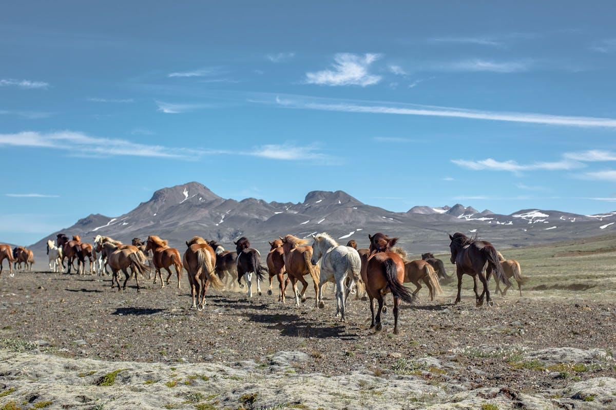 Riding Tours South Iceland hero image