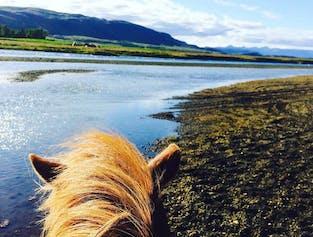 1 hour horse riding tour