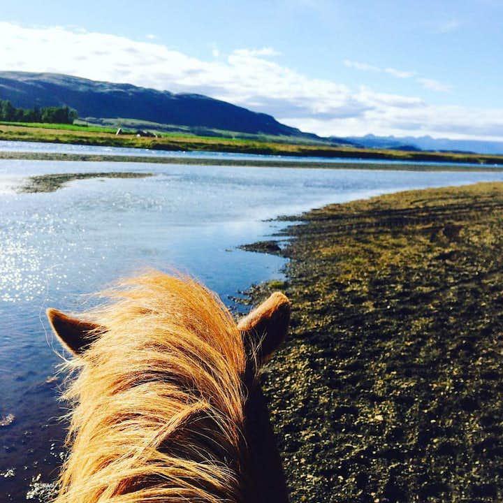 En timmes ridtur till häst från Flúðir på södra Island