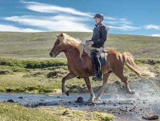 2 hour horse riding tour