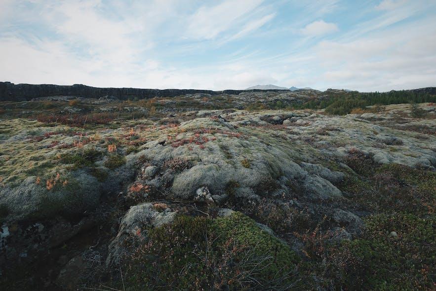 冰岛苔藓地