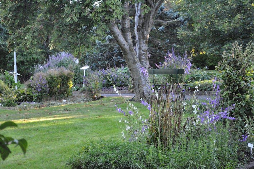 Botanical garden in Akureyri