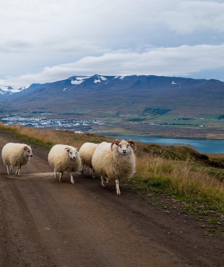 The Icelandic Roads