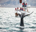 Húsavík is often called the whale watching capital of Iceland.