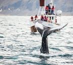 Na północy Islandii leży Husavik, który jest jednym z najlepszych punktów do rejsu oglądania wielorybów.