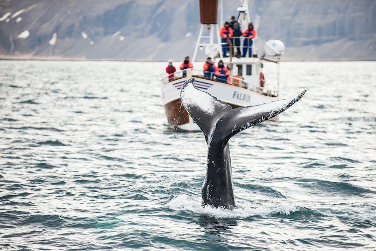 クジラが多くみられる夏の間、フーサヴィークの入り江はホエールウォッチングで賑わう