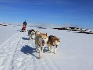 ミーヴァトン発 シベリアンハスキーがひく犬ぞり体験