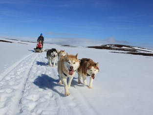 Siberian Husky Tour | Dog Sledding in the Myvatn Area