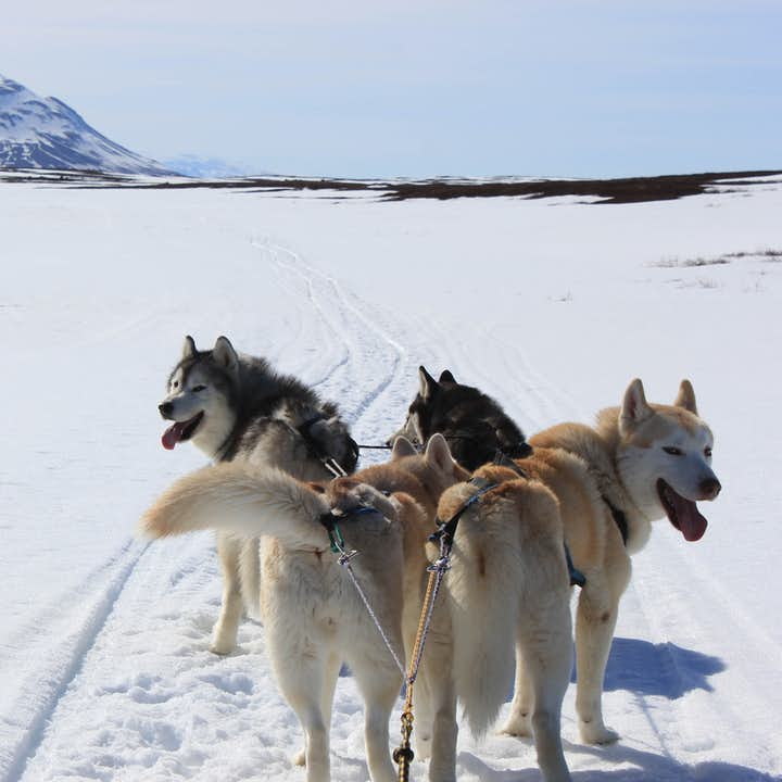 The Siberian Husky Tour This tour is perfect for those who love animals, adventure, and spectacular scenery.